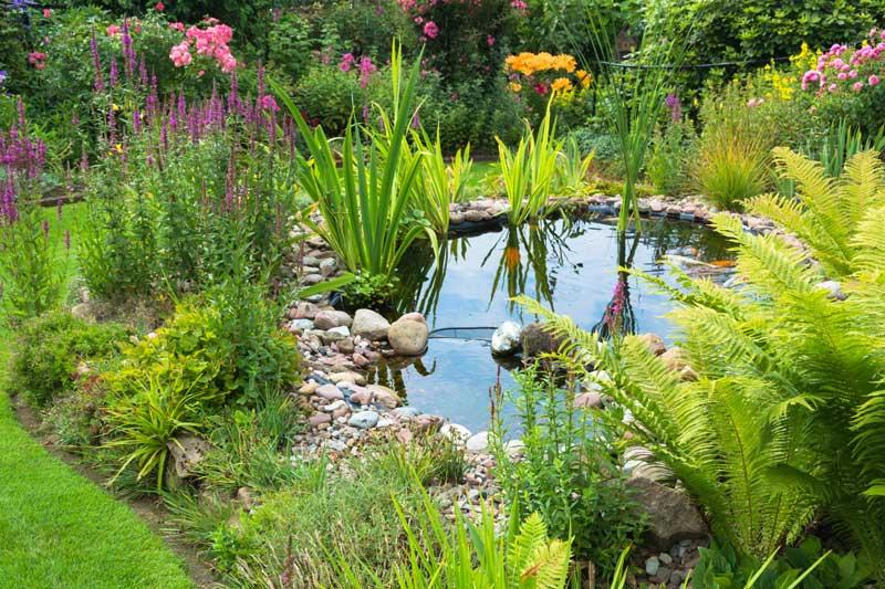 Teichbau – Gartenbau_Landschaftsbau Thomas Diederich
